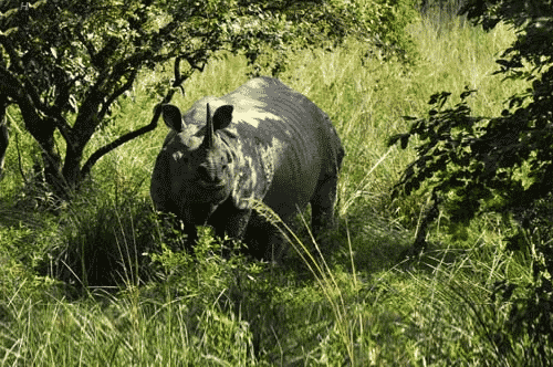 Pobitora Wildlife Sanctury